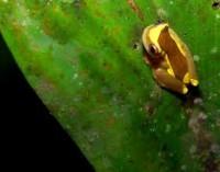 Anfibios y la cura contra el cáncer