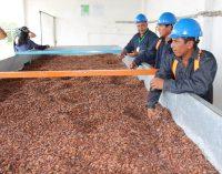 Produríos EP exporta los primeros 550 quintales de cacao a México