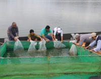 Prefectura busca repoblar el pez 'vieja azul' en afluentes de la provincia