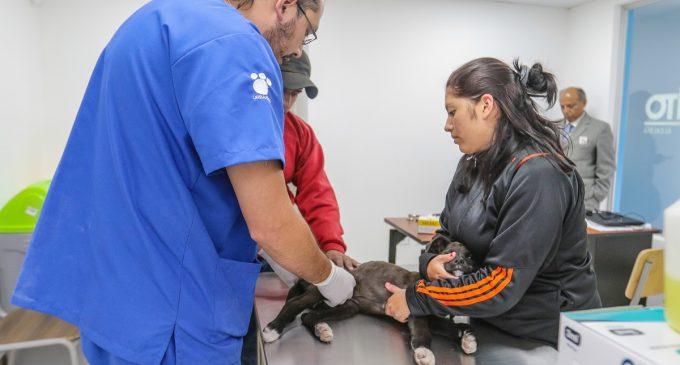 Quito estrena una clínica veterinaria gratuita