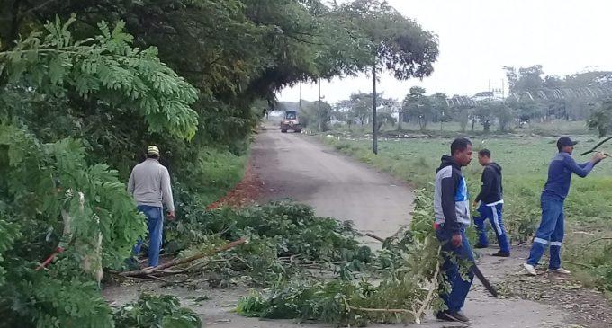 Municipio continúa con poda de árboles