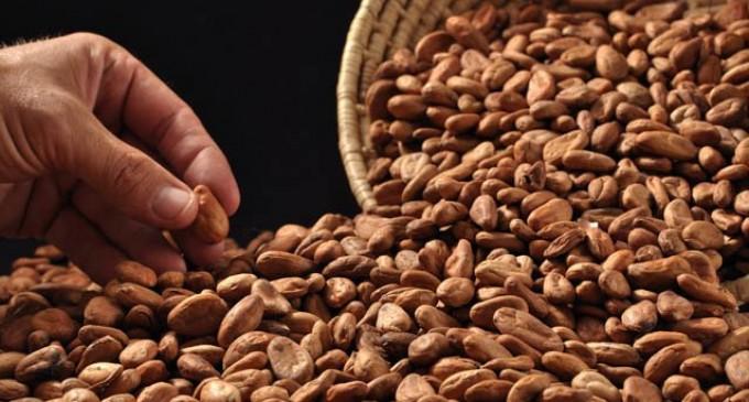 Café y cacao con calificación única