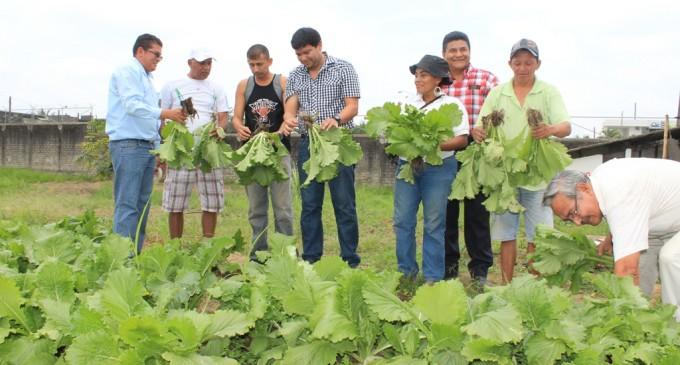 Más de 3.500 familias se benefician con huertos orgánicos