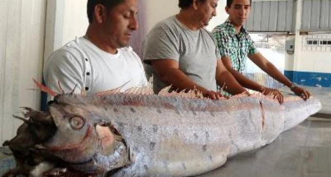 Un pez gigante fue capturado en Manta