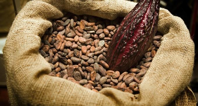 El cacao es amazónico y se consumía hace 5.500 años