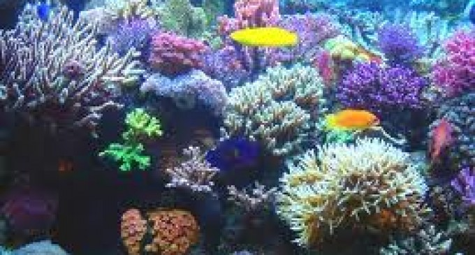 Los corales ayudan a regular la temperatura de la Tierra