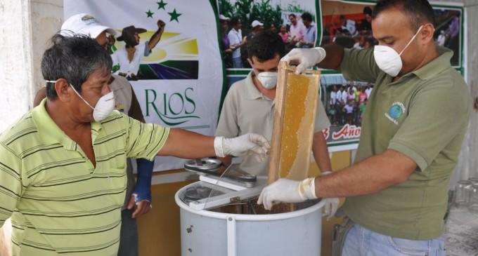 Más de 240 familias cosechan miel de abeja en esta época