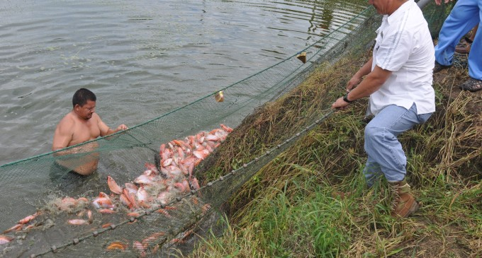 Campesinos de Los Ríos empiezan a definir la Ruta de la Tilapia