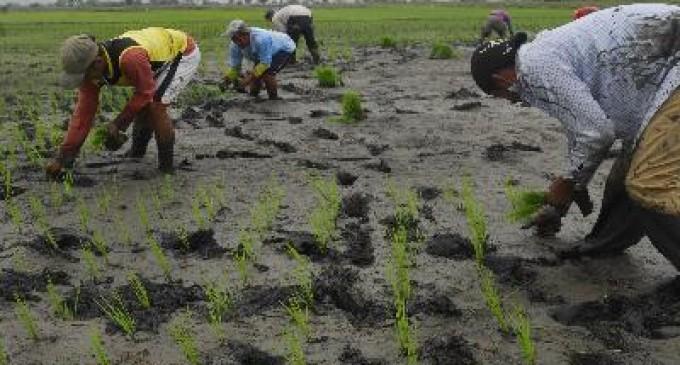 El olvido de la cuenca del Guayas pasa factura al agro
