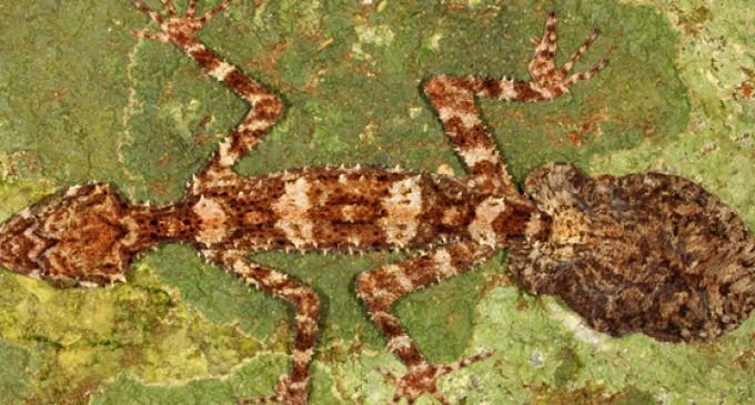 Descubren tres nuevas especies en Australia