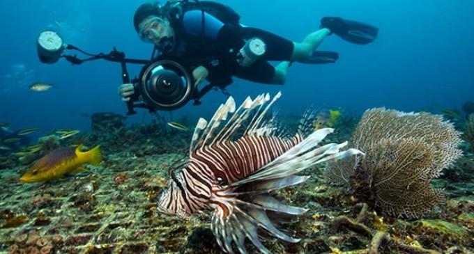 El pez león, un 'monstruo' liberado por el humano que amenaza los océanos