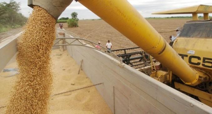 Escasez de compradores de soya afecta a productores del grano