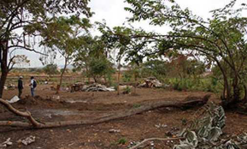 Se reforestará el Bosque Protector Cerro Colorado