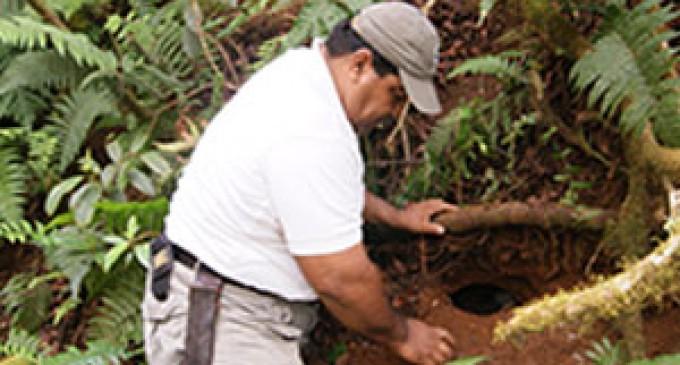 Guardaparques monitorean petreles en Santa Cruz