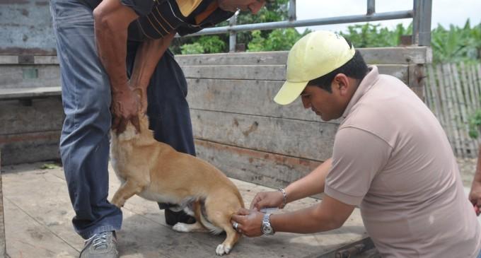 Más de 2.600 mascotas vacunadas contra la rabia