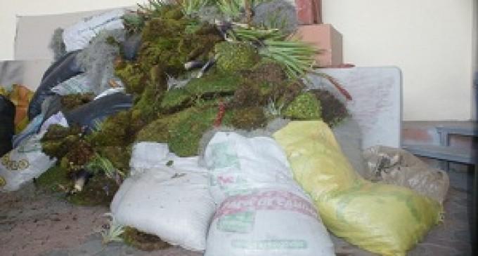 16 sacos de musgo fueron decomisados