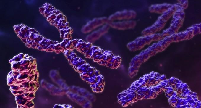 El cromosoma Y masculino podría ser desechado