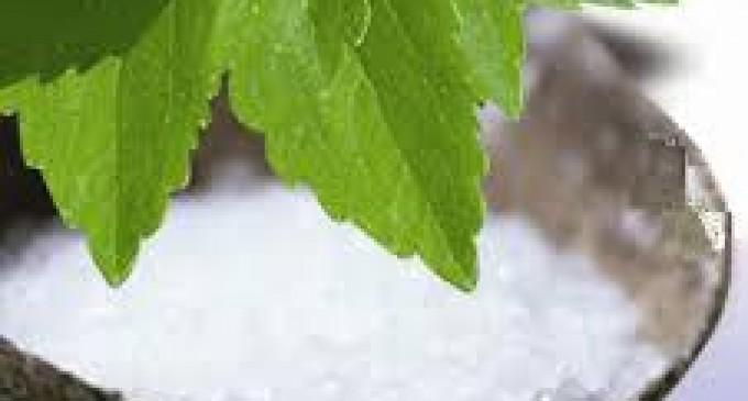 Perú alcanza la primera certificación Rainforest Alliance de stevia en el mundo