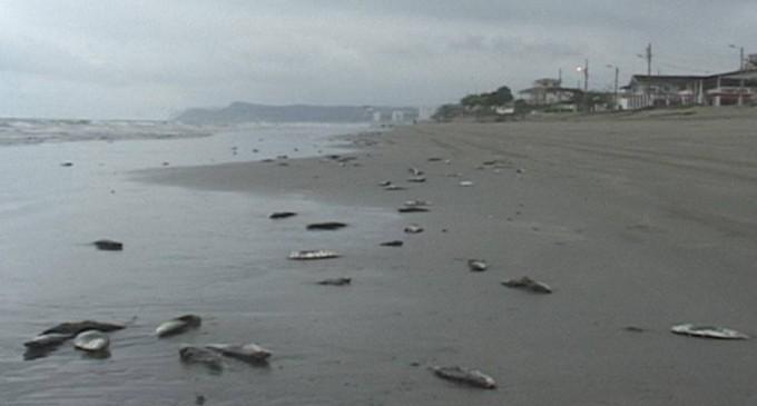 Decenas de peces aparecen muertos en playa de Esmeraldas