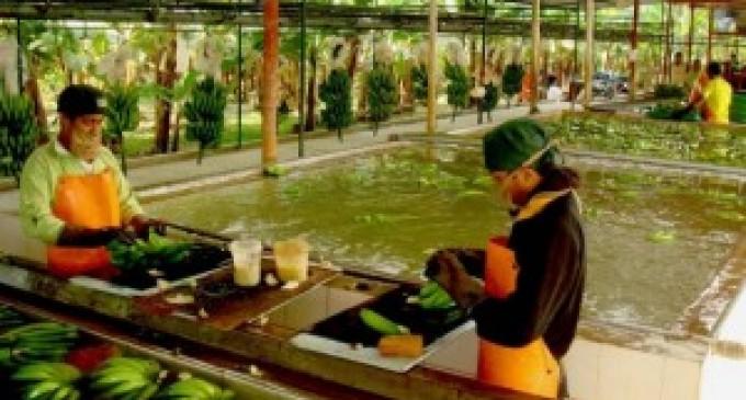 SRI rechazó la propuesta de pago de Exportadora Bananera Noboa