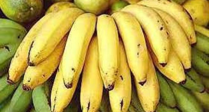 El banano de Ecuador sigue el camino hacia un abismo