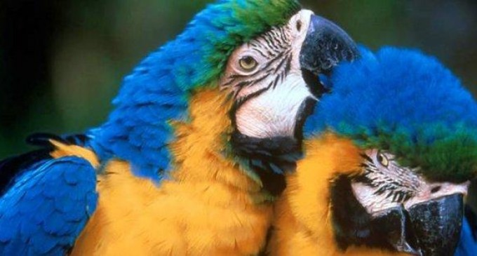 31 especies silvestres fueron rescatadas de cautiverio en Imbabura