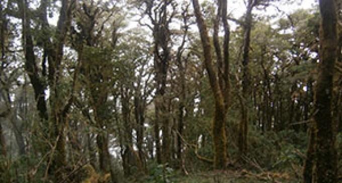 Mantenimiento de bosques protectores en el país