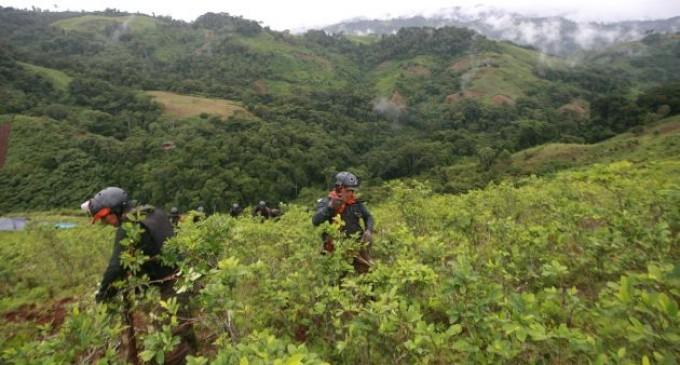 Perú quiere destruir 75% de cultivos de coca en zona dominada por Sendero Luminoso