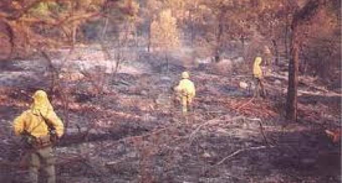 La perdida de los bosques hace que perdamos todos