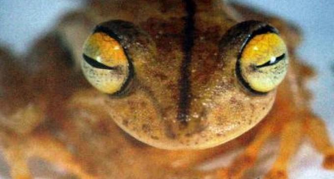 Se descubrieron 35 nuevas especies en áreas protegidas