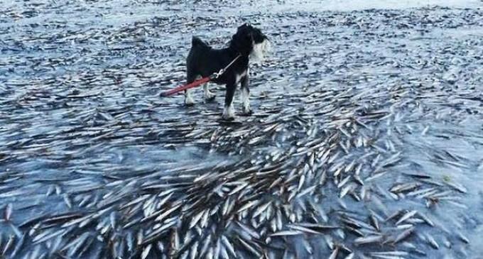 Noruega: peces mueren congelados en pocos minutos