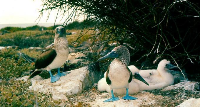 El Niño y la malaria amenazan a las aves de Galápagos
