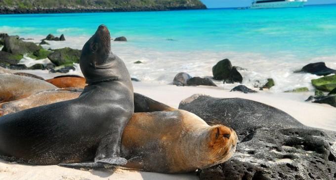 Galápagos celebra 36 años como Patrimonio Natural de la Humanidad