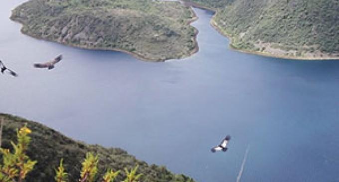 Avistamiento de cóndor andino en la Reserva Ecológica Cotacachi-Cayapas