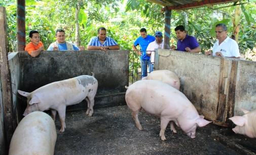 Proyectos productivos son reinvertidos con éxito en Los Ríos