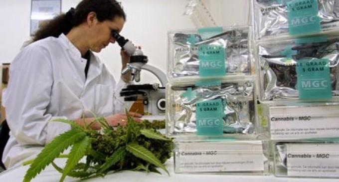 Científicamente probado: La marihuana lleva a las células cancerígenas al suicidio
