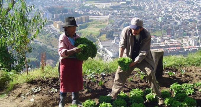 10 ciudades latinoamericanas donde florece la agricultura urbana