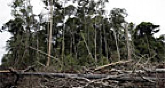 Indonesia desplaza a Brasil en tasa de deforestación de bosque primario, según estudio