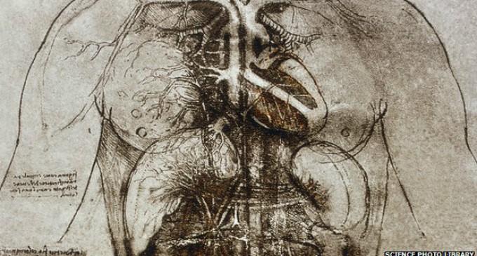 ¿Por qué los dibujos del corazón de Leonardo da Vinci siguen siendo relevantes?