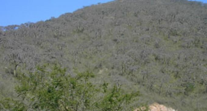 Bosque Seco es parte de Reservas de Biosfera de la UNESCO