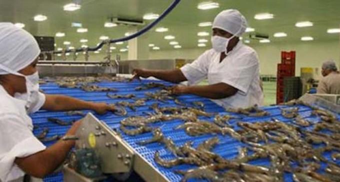 Auge del camarón por crisis tailandesa
