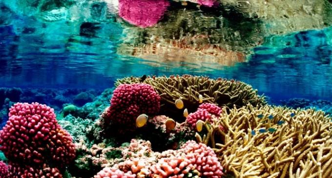 El Caribe pierde la mitad de sus arrecifes de coral por la sobrepesca del pez loro