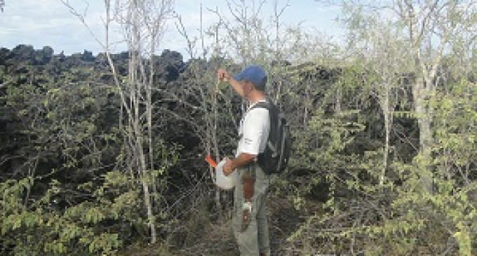 Monitorean sitios para determinar presencia de hormigas introducidas