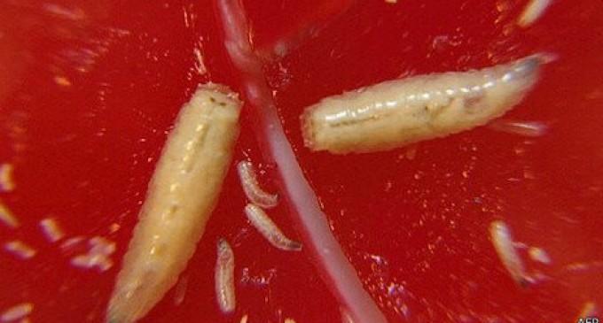 Cómo las larvas pueden reducir las facturas hospitalarias