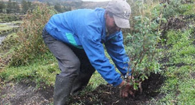 350 plantas se siembran en la Comunidad de Piñan-Imbabura