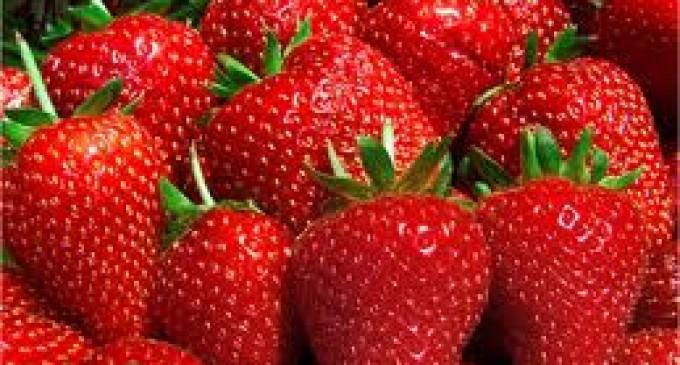 Bondades de las fresas