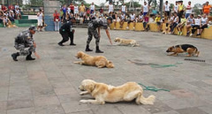 Culminó primer curso de adiestramientos de canes