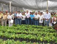 Prefectura creará empresa comercializadora de cacao