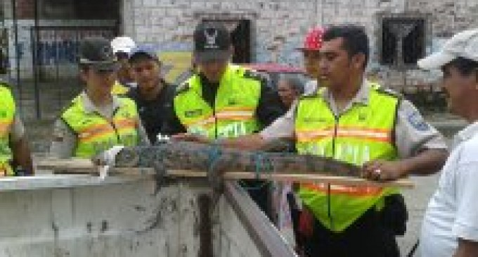 Rescatan un cocodrilo  de un metro de largo en Puebloviejo