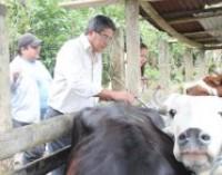 Prefectura impulsa plan de mejoramiento de ganado bovino
